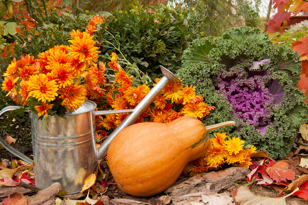 Fruit and Vegetables Which Will Thrive During Autumn/Winter