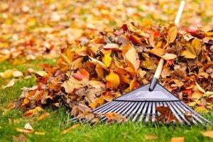 Leaves & Debris