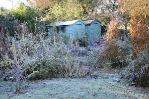 A landscape view on an Autumn morning in frost & sunlight of a garden allotment raised beds for vegetables, plant borders, green frosty grass lawn brown & green leafed tree towards two blue wood sheds