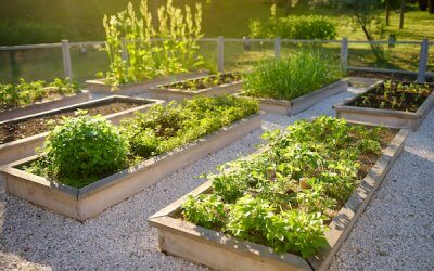 Early Summer Garden Ideas & Making the Most of Your Garden This Summer