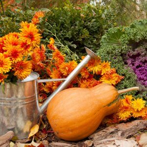 Orange,Pumpkin,,Watering,Can,With,Chrysanthemums,And,Decorative,Cabbage,In
