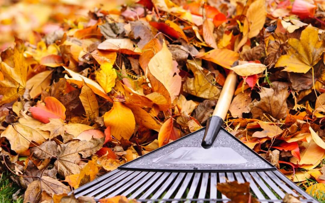 Preparing Your Garden For Autumn