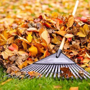 Pile,Of,Fall,Leaves,With,Fan,Rake,On,Lawn